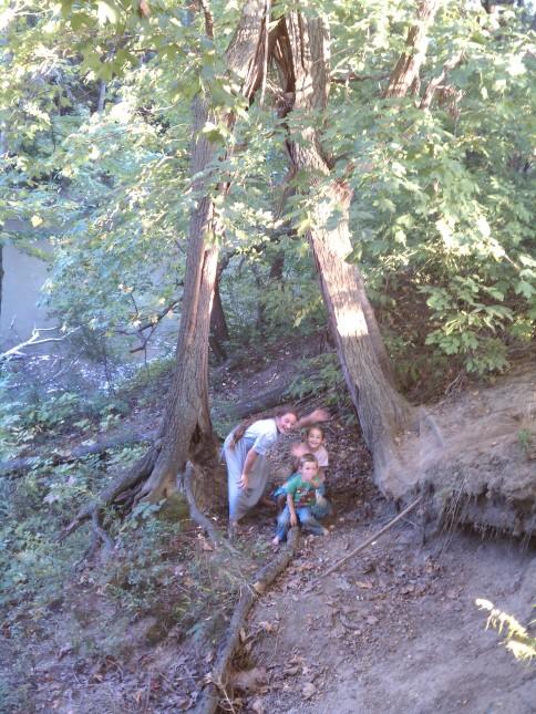Tree split while still standing